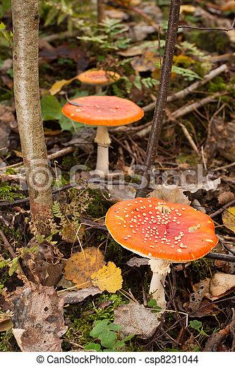 Hongos en el bosque verde - csp8231044