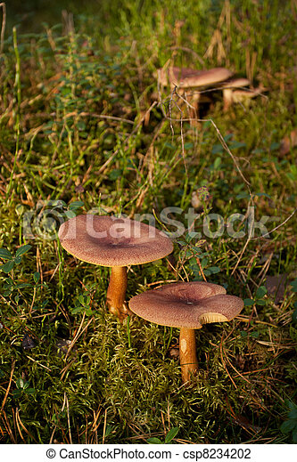Hongos en el bosque verde - csp8234202