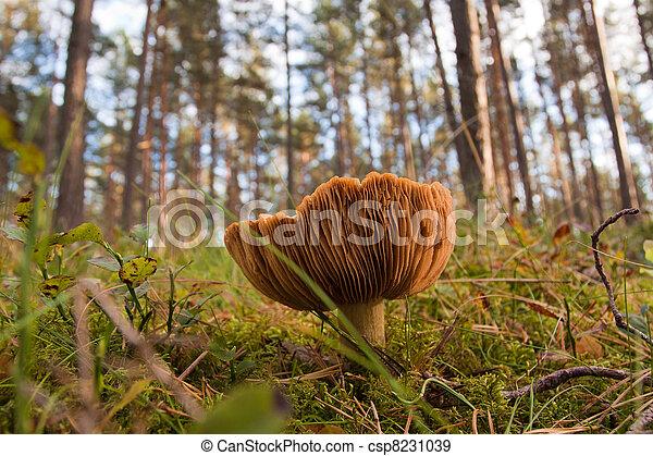 Hongos en el bosque verde - csp8231039