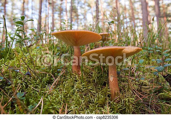 Hongos en el bosque verde - csp8235306