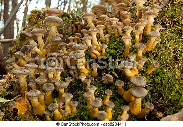 Hongos en el bosque verde - csp8234411