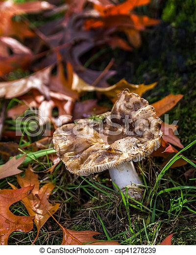 Hongos en el bosque de Canadá - csp41278239