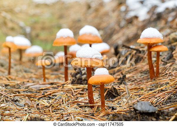 Hongos en madera de otoño - csp11747505