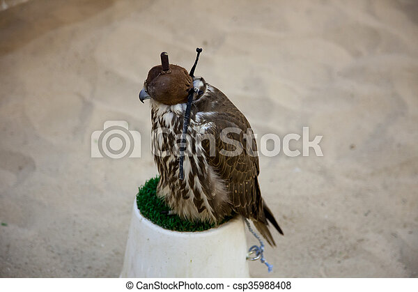 Hooded falcon resting on green plastic grass - csp35988408