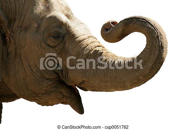 hoofd, elefant - csp0051762