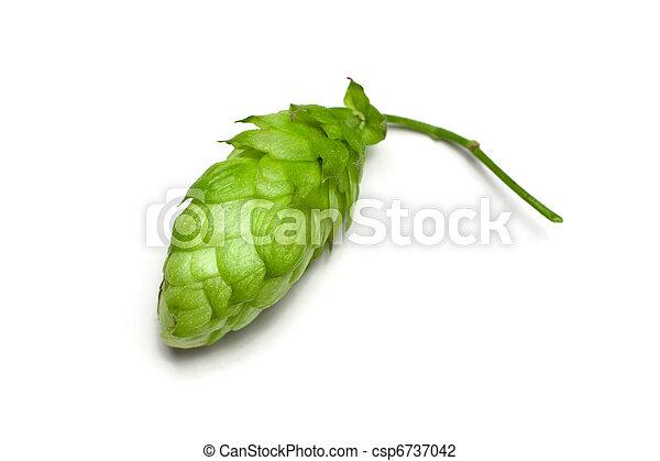 Hop cone - csp6737042