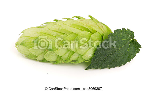 hop cone with leaf isolated on white background close-up - csp50693071