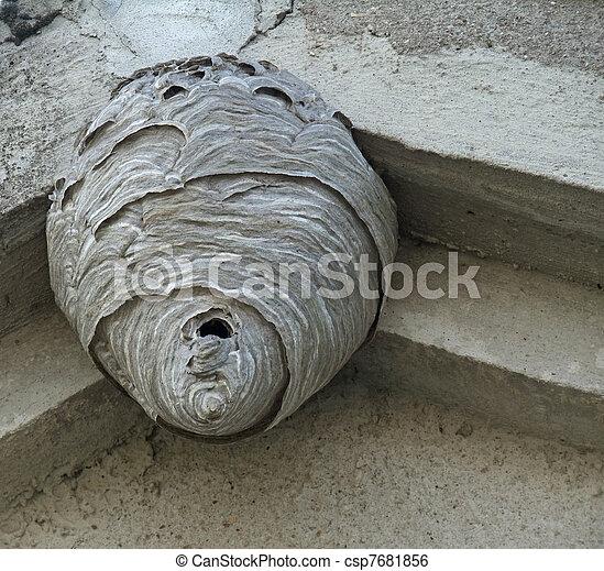 Hornets Nest Under A Roof Overhang Shot Of A Big Hornets