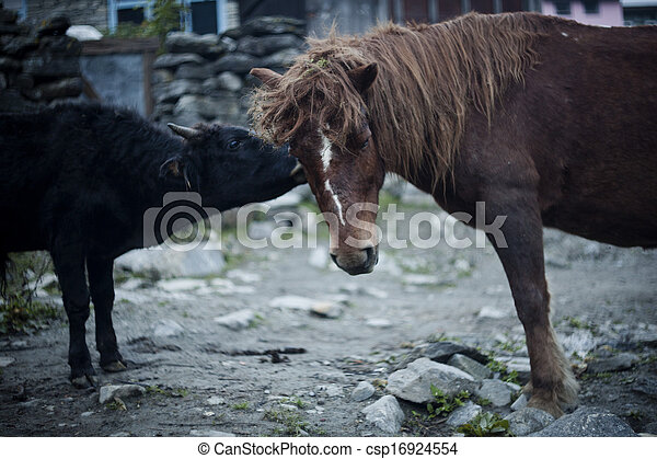 Horse and cow in front of a house, Bulbule, Nepal - csp16924554