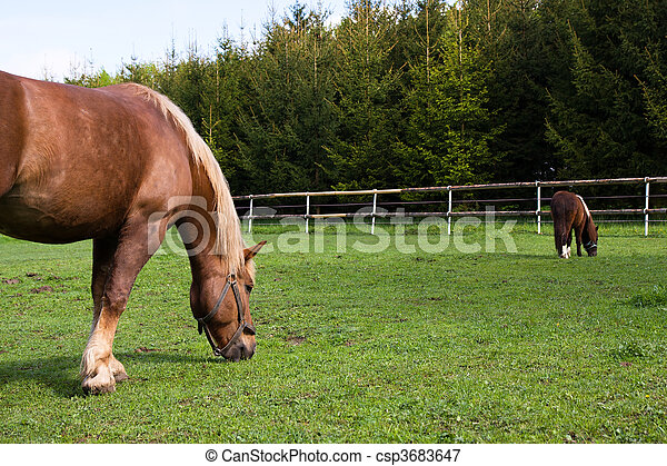 Horse and pony in the meadow in the paddock - csp3683647