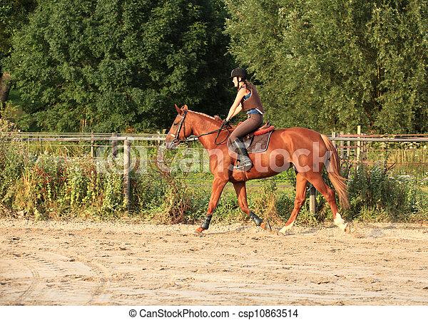 horse and rider - csp10863514