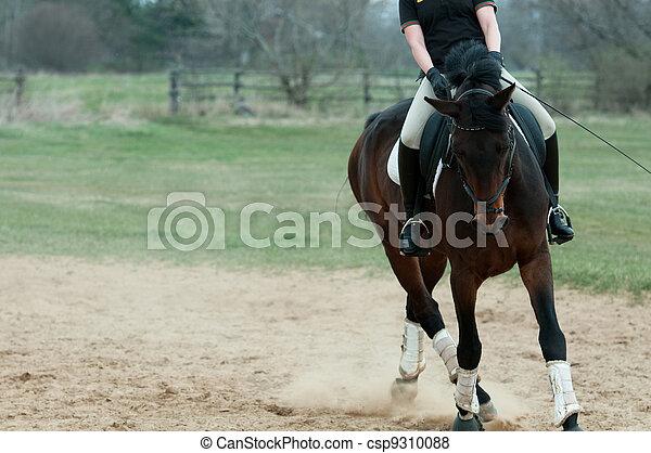 Horse and rider - csp9310088