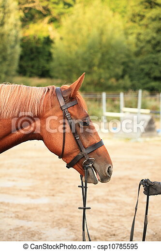 horse and rider - csp10785595
