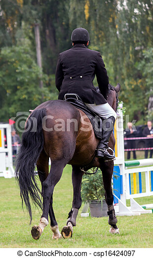 horse and rider - csp16424097