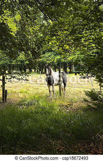 Horse behind barbed fence - csp18672493