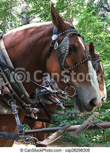 Horse Carriage in Sturbridge, MA - csp38298308