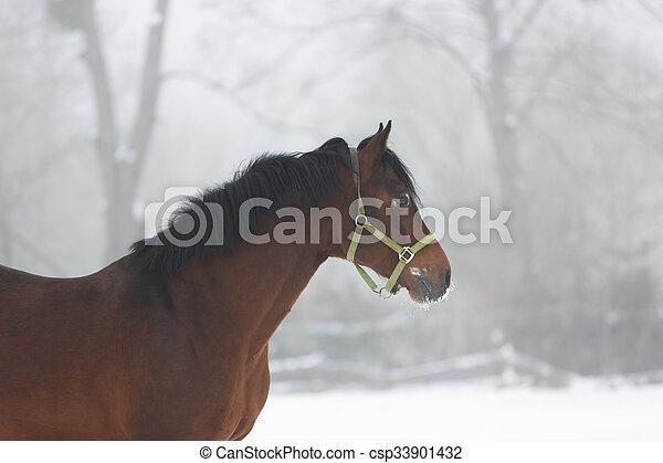 Horse close up in fog - csp33901432