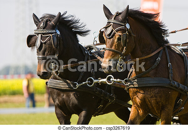 horse-drawn carriage - csp3267619