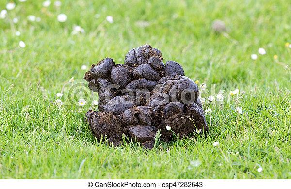 Horse dung on grass - csp47282643