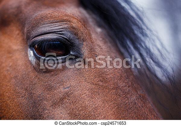 Horse Eye Detail - csp24571653