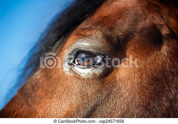 Horse Eye Detail - csp24571656