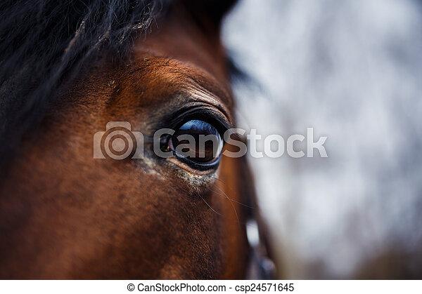 Horse Eye Detail - csp24571645