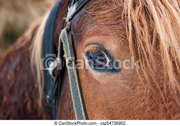 Horse eye - csp54736952