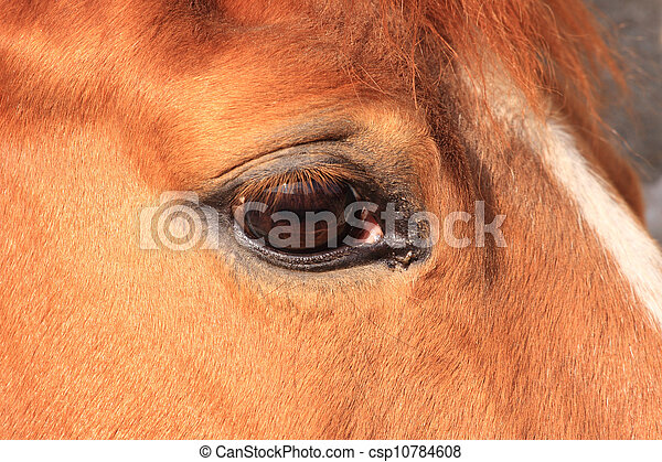 horse eye - csp10784608