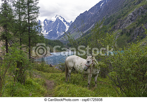 Horse grazing on the shore of a mountain lake. Altai Mountains, Russia. - csp61725938