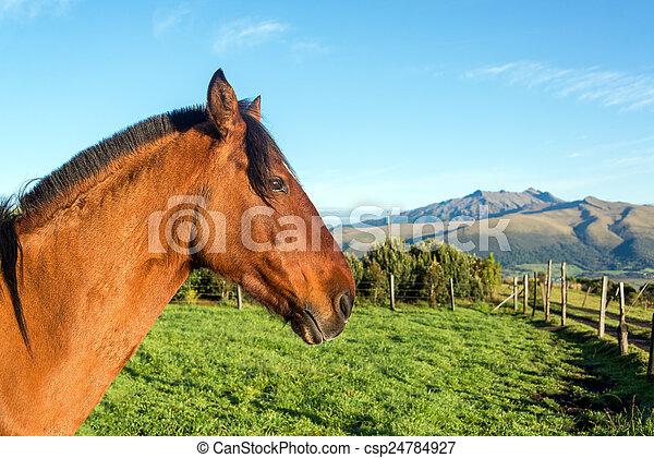 Horse Head Closeup - csp24784927