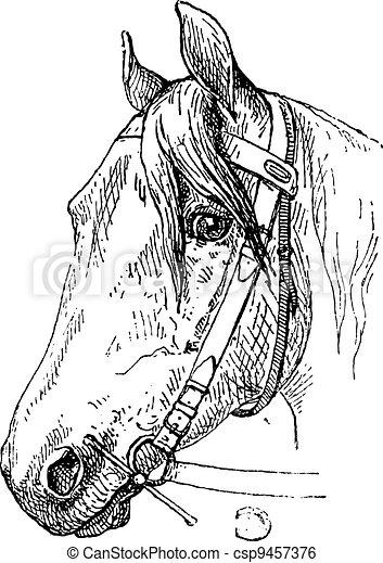 Horse Headcollar and Bit Mouthpiece, vintage engraving - csp9457376