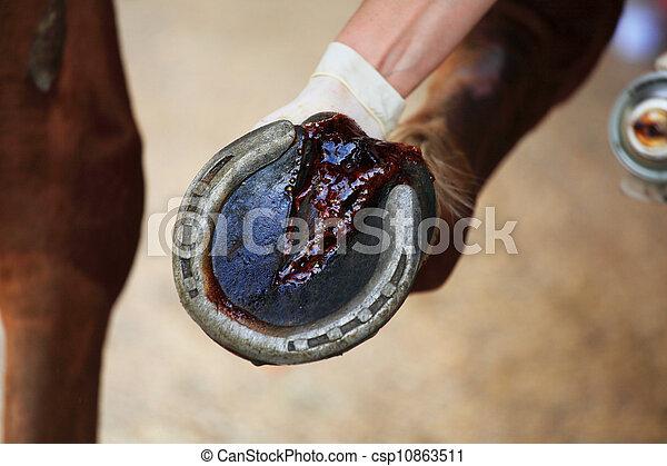 horse hoof - csp10863511