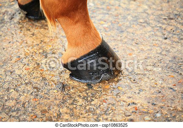 horse hoof - csp10863525