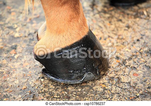 horse hoof - csp10786237