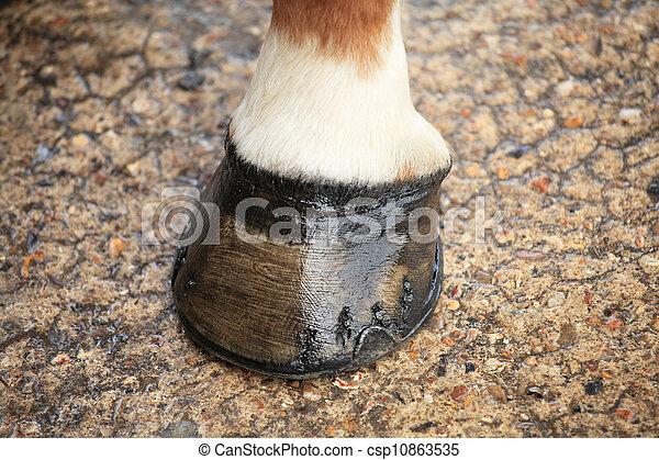 horse hoof - csp10863535