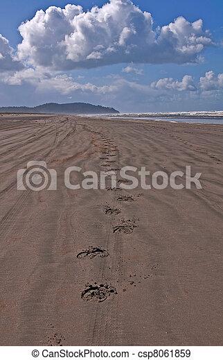 Horse Hoof Tracks on An Empty Beach - csp8061859