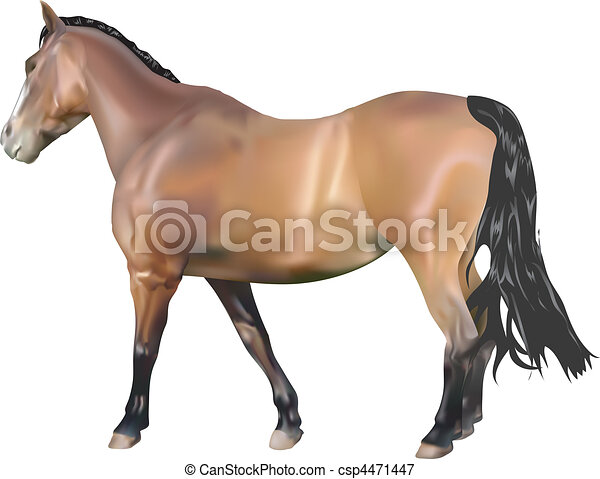 Horse Illustration - csp4471447