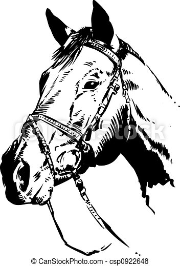 Horse Illustration - csp0922648
