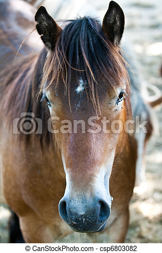 Horse in a front view horse head in a front view stock photo horse head in a front view sciox Choice Image