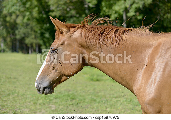 horse in a meadow - csp15976975