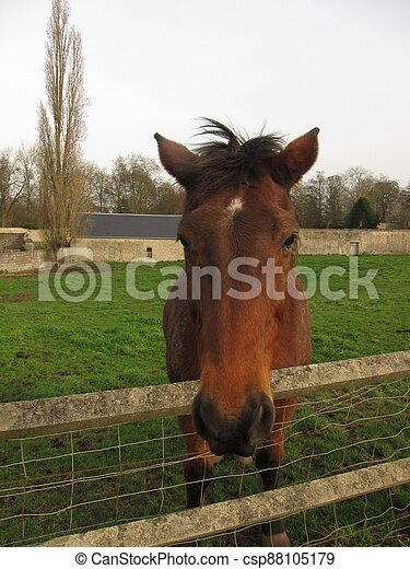 Horse in a meadow - csp88105179