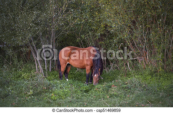 Horse in a meadow - csp51469859