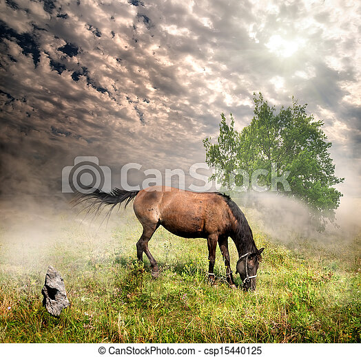 Horse in a meadow - csp15440125