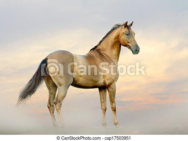 horse in fog - csp17503951