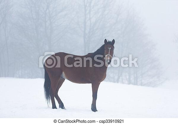 Horse in fog - csp33910921