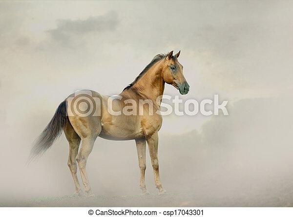 horse in fog - csp17043301