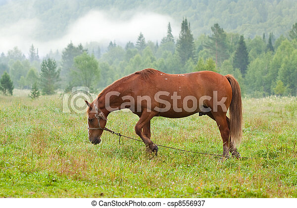 horse in morning - csp8556937