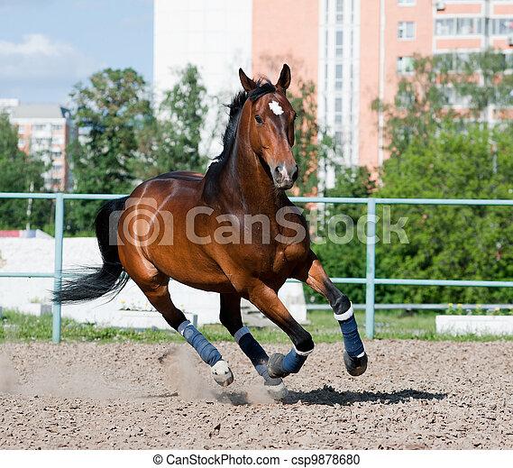horse in paddock - csp9878680