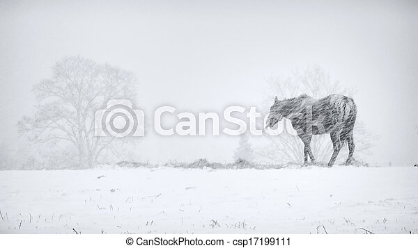 horse in snow storm - csp17199111