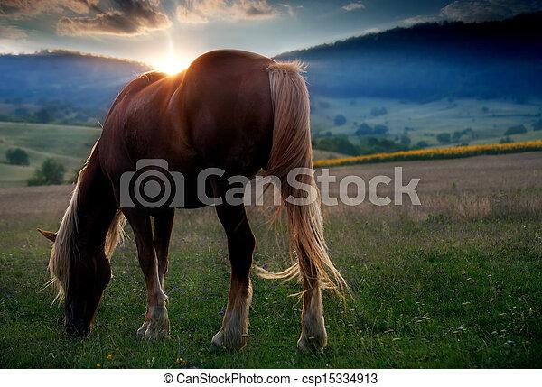 horse in sunset - csp15334913